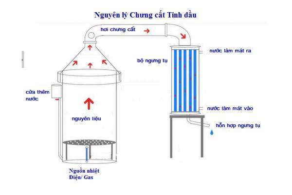 Tự làm nước hoa từ tinh dầu bằng nồi chưng cất tinh dầu mini